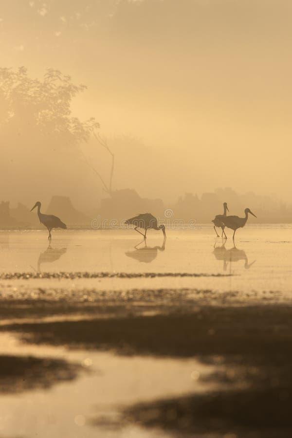 在mistic光的鸟 免版税图库摄影