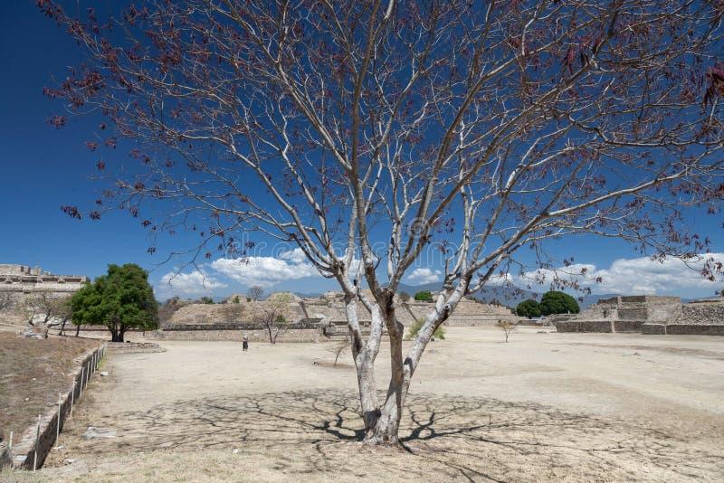 在Monte奥尔本,瓦哈卡,墨西哥的古老墨西哥人废墟 免版税库存照片