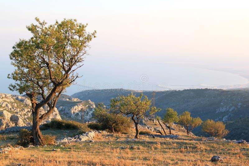 在Monte Sant'Angelo,意大利附近的杏仁果树园 图库摄影
