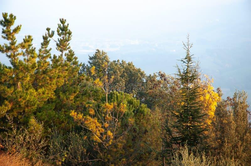 在Montefeltro小山的树,在意大利的马尔什地区 免版税库存图片