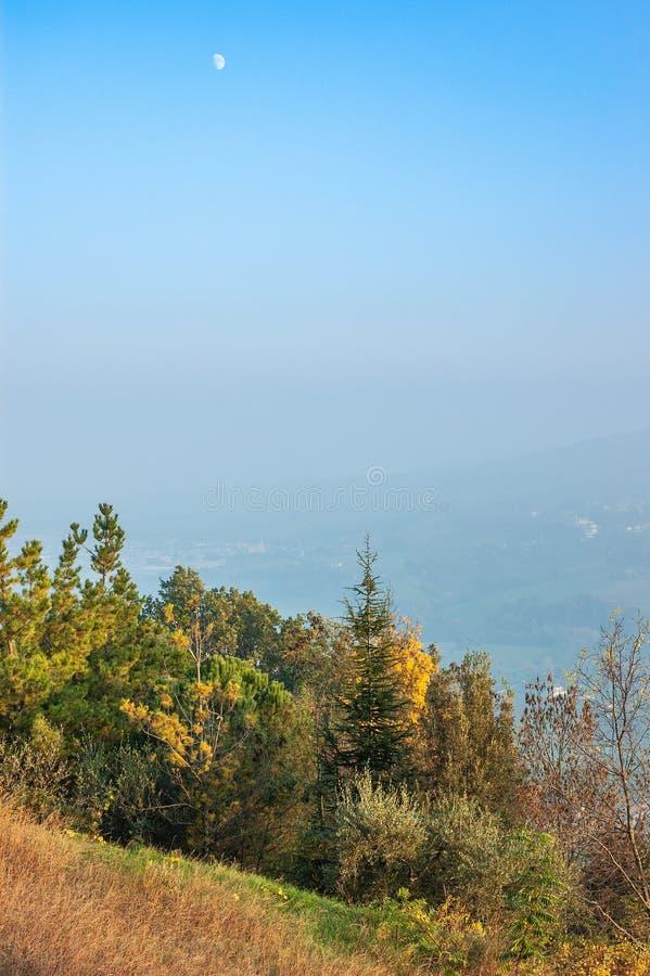在Montefeltro小山的树,在意大利的马尔什地区 库存照片