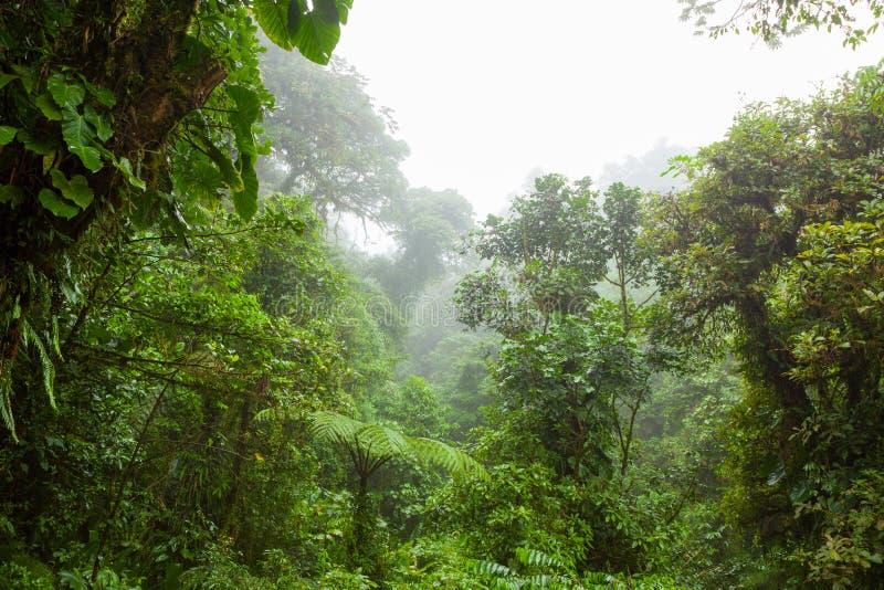 在Monteverde云彩森林储备的有薄雾的雨林 免版税库存图片