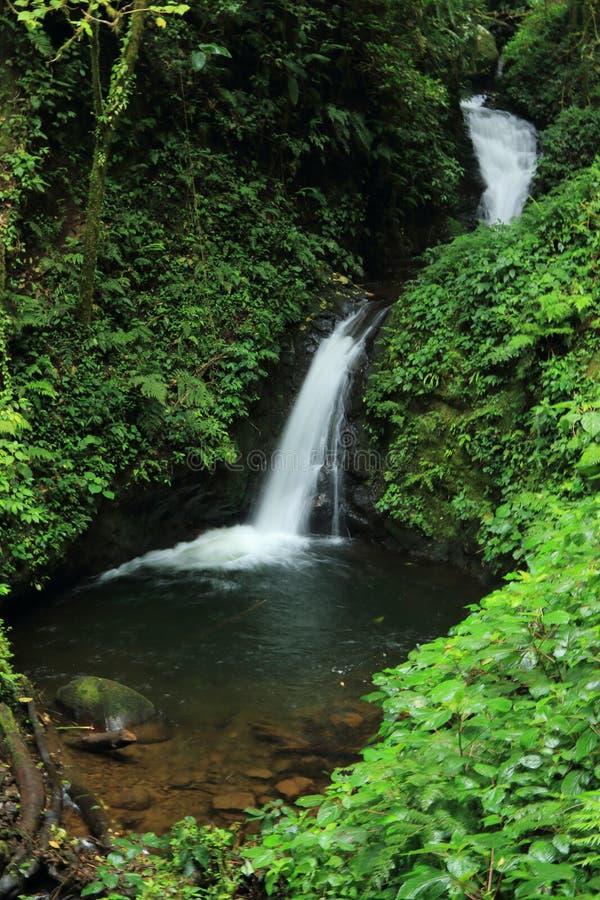 在Monteverde生物储备,哥斯达黎加的瀑布 免版税库存照片