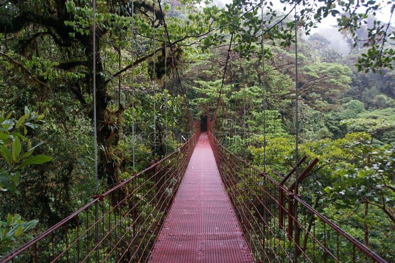 在Monteverde的暂停的桥梁 库存图片