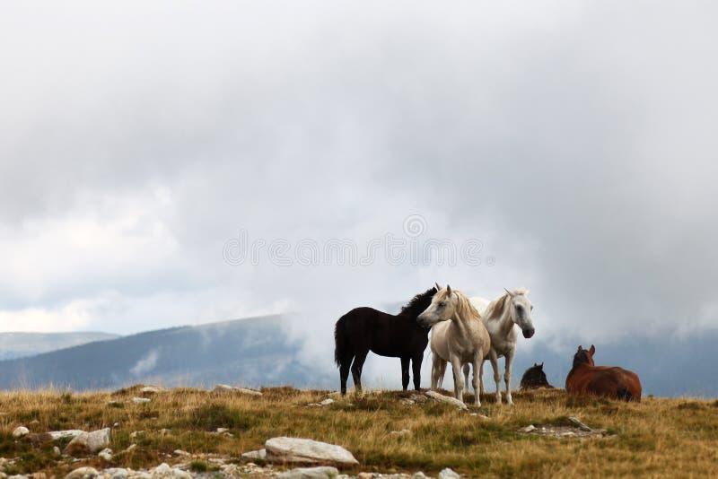 在moutain牧场地的马牧群 库存照片