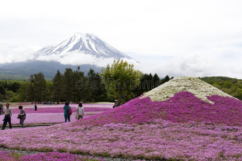 在Mt的桃红色青苔 富士 免版税库存照片