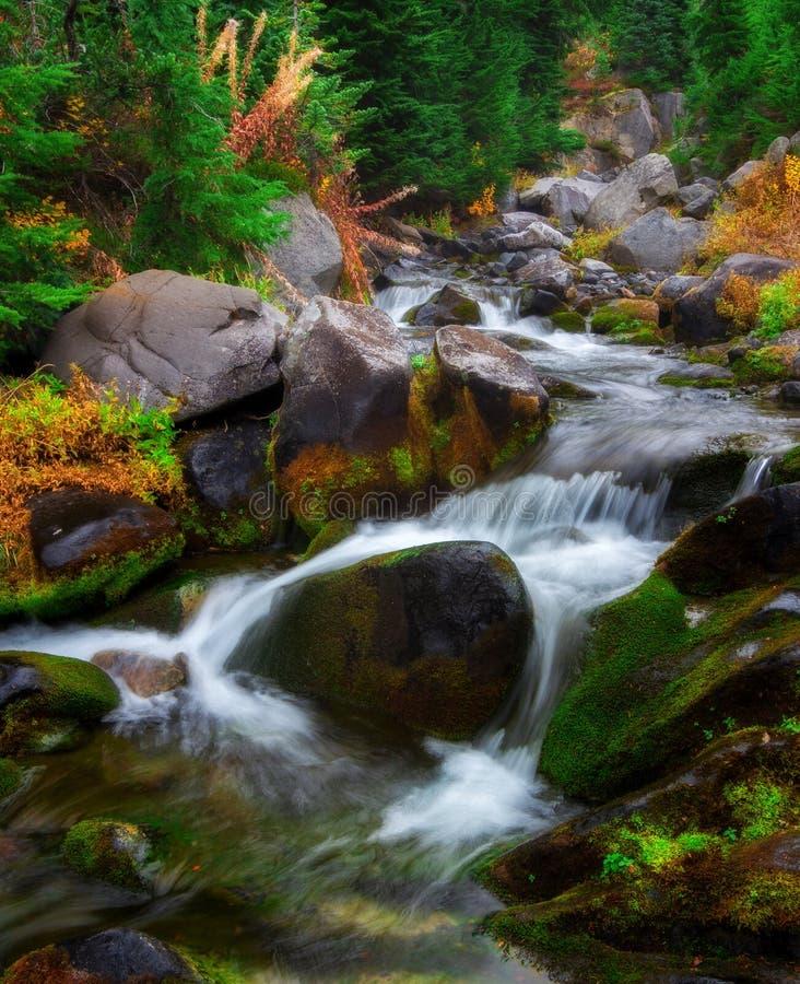 在Mt的秋天 更加多雨的国家公园,华盛顿州 免版税库存图片