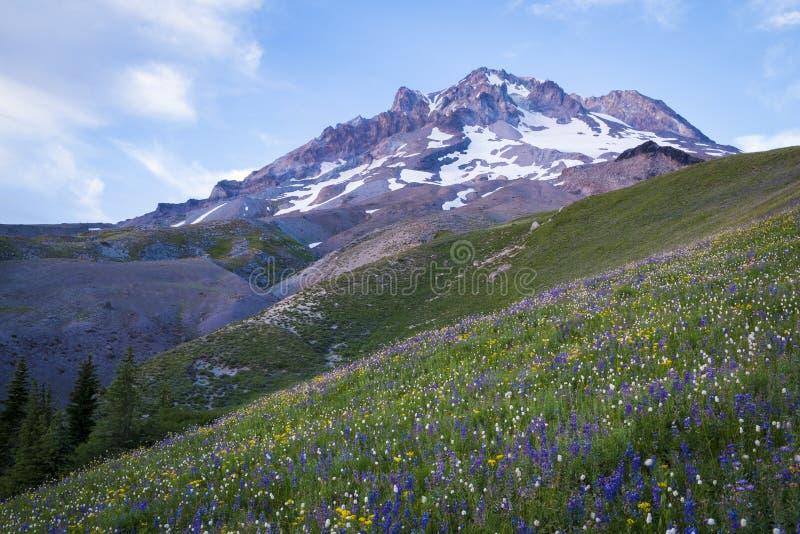 在Mt.敞篷,俄勒冈的夏天野花 免版税库存照片