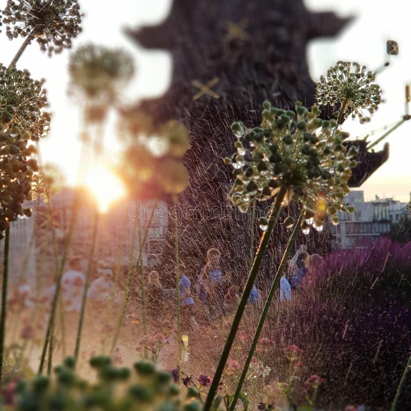 在Museon公园浇灌在草和花的下落在莫斯科 免版税库存照片