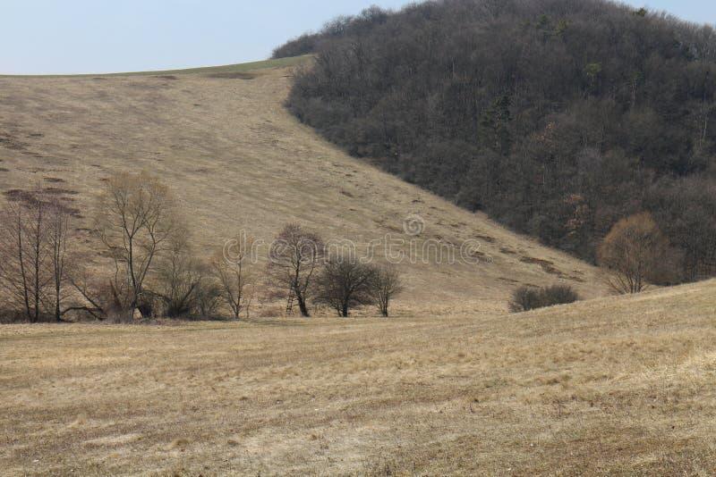 在Myjava附近的高地风景 库存图片