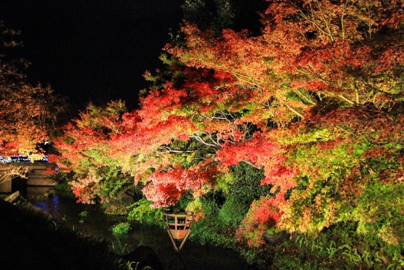 在NABANA的照明没有佐藤,米氏,日本 - 有吸引力的秋叶 免版税库存图片