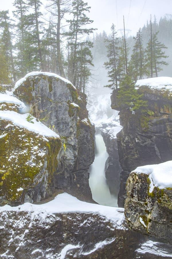 在Nairn的冬天秋天下跌省公园,不列颠哥伦比亚省 库存照片