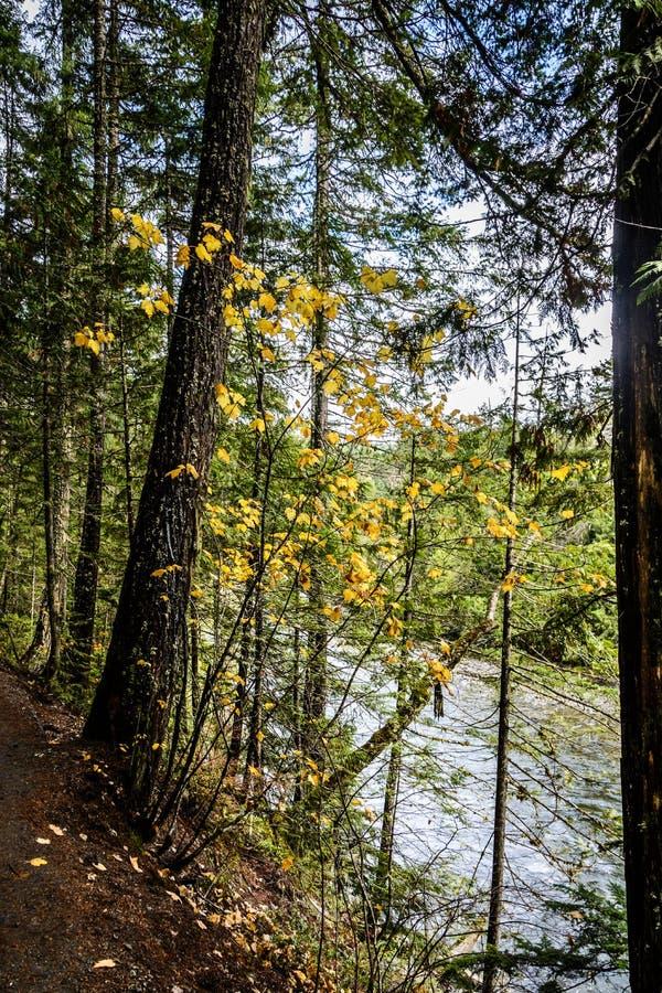 在Nairn秋天的秋天,加拿大 免版税库存图片