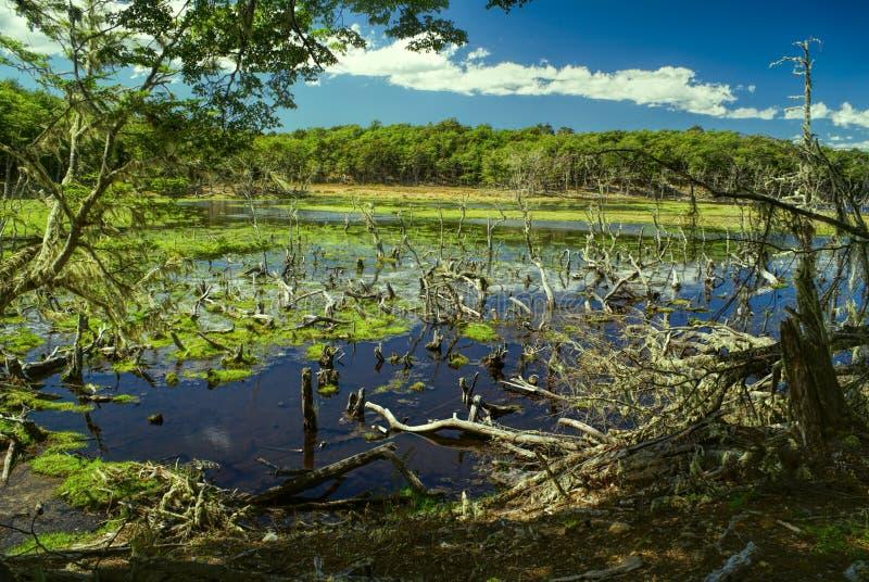 在Navarino的沼泽 库存照片