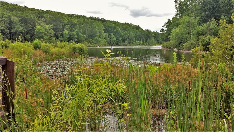 在NC动物园的赛普里斯沼泽 免版税图库摄影