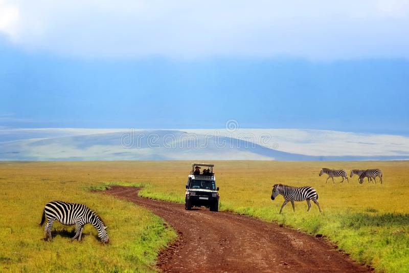 在Ngorongoro火山口的徒步旅行队 野生斑马和一辆汽车有游人的山背景的  闹事 坦桑尼亚 免版税库存照片