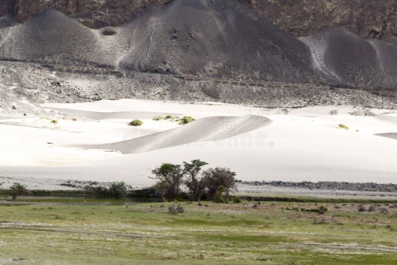 绿洲在nubra谷寒冷沙漠 免版税图库摄影