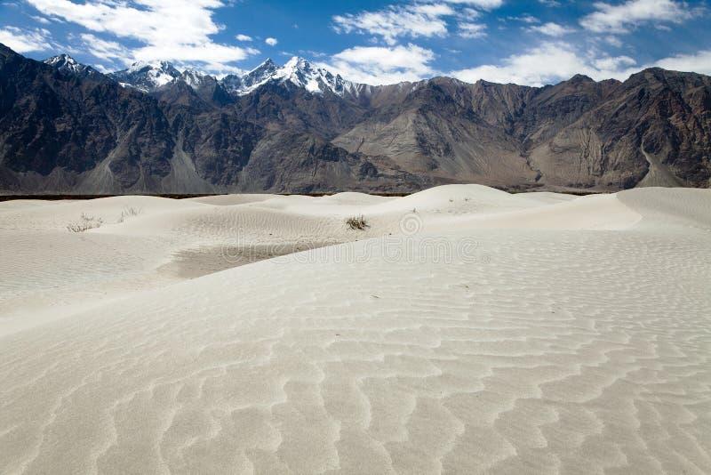 在Nubra谷的沙丘 免版税库存图片