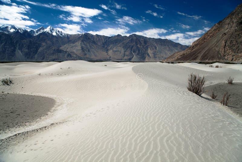 在Nubra谷的沙丘 免版税图库摄影