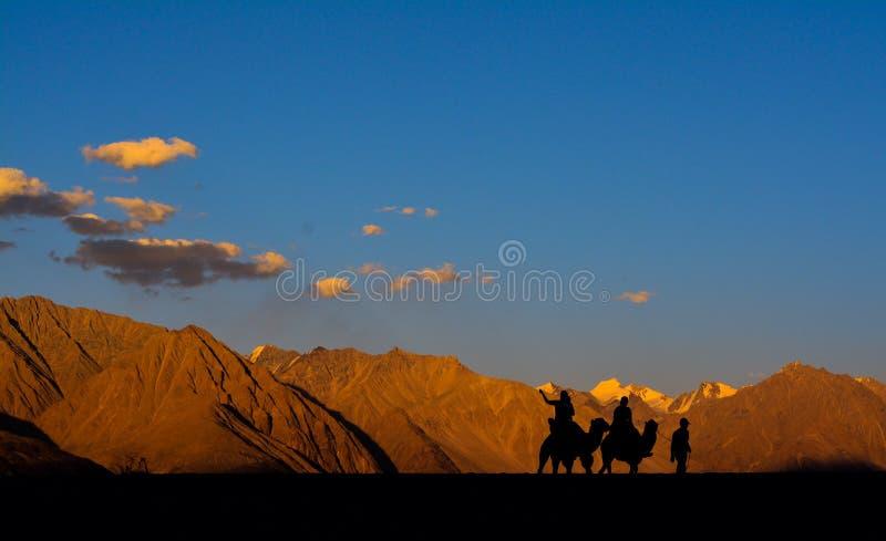 在Nubra谷,拉达克,印度的骆驼乘驾 库存照片
