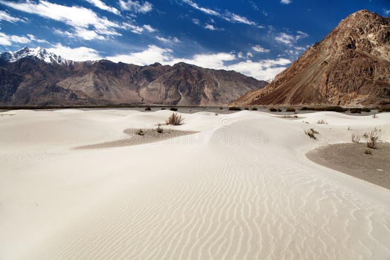 在Nubra谷-拉达克-查谟和克什米尔的沙丘 免版税图库摄影