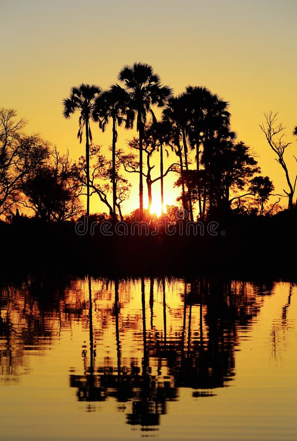 在Okavango三角洲的日落-非洲 库存图片