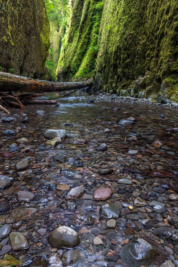 在Oneonta峡谷足迹,俄勒冈的美好的自然 免版税图库摄影