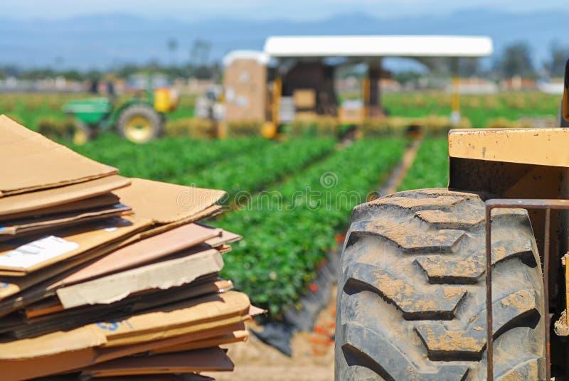 在Oxnard运作和被收获的草莓的领域,加利福尼亚附近 库存图片