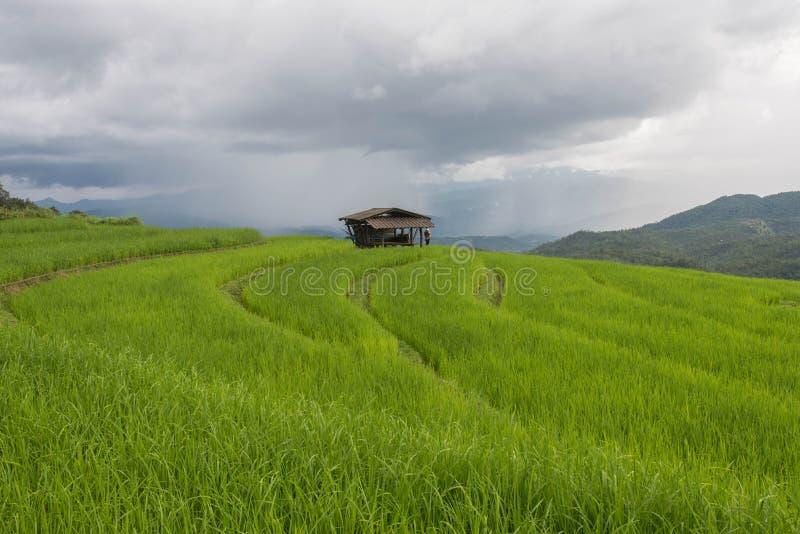 在Pa的绿色露台的米领域发出当当声Pieng 免版税库存图片