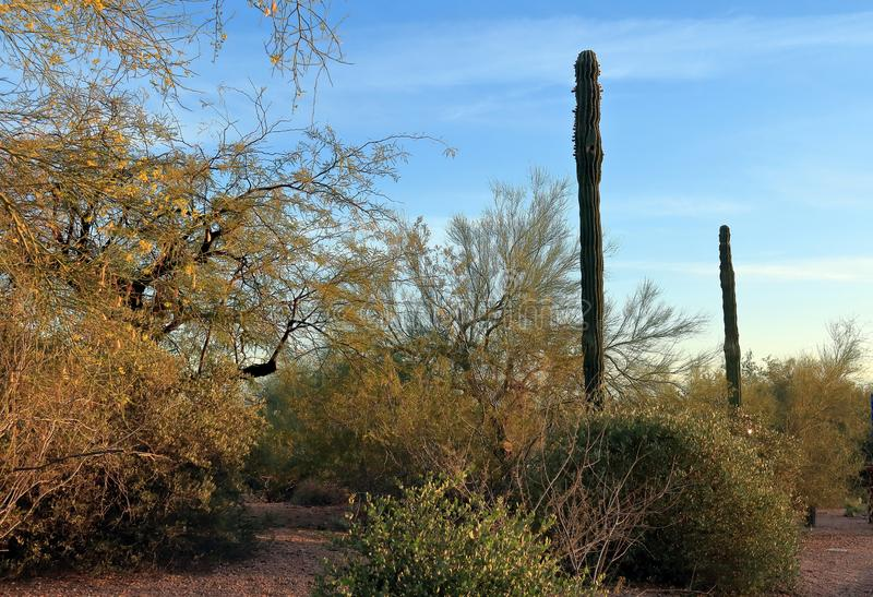 在Papago公园的一个沙漠风景在菲尼斯 图库摄影