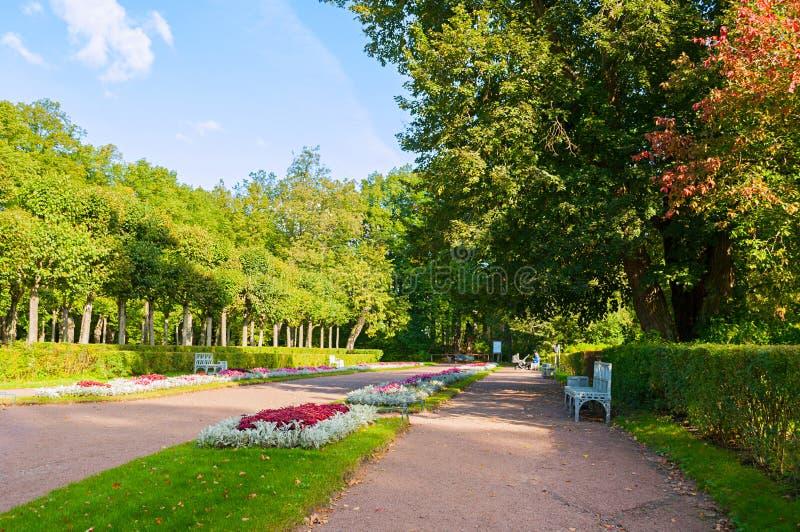 在Pavlovsk的,圣彼德堡,俄罗斯Pavlovsk公园疆土停放胡同、白色长凳和花床 免版税库存图片