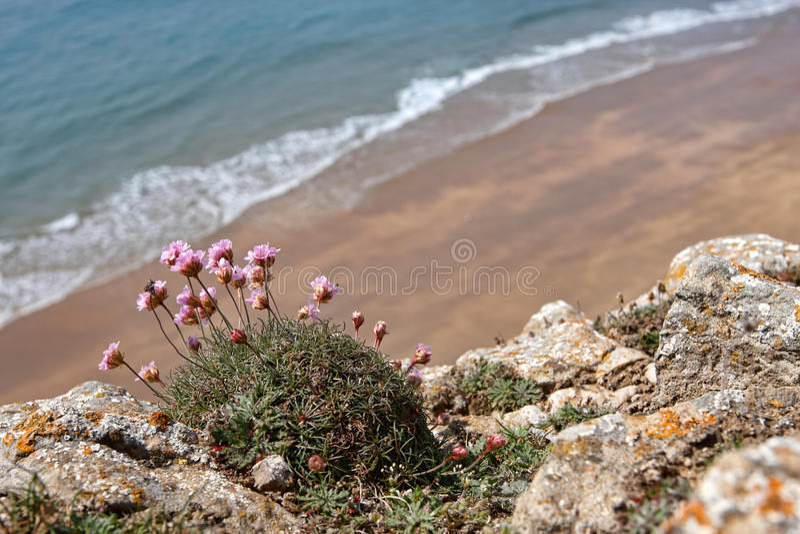 在Pembrokeshire的一个小的离开的海滩 库存照片