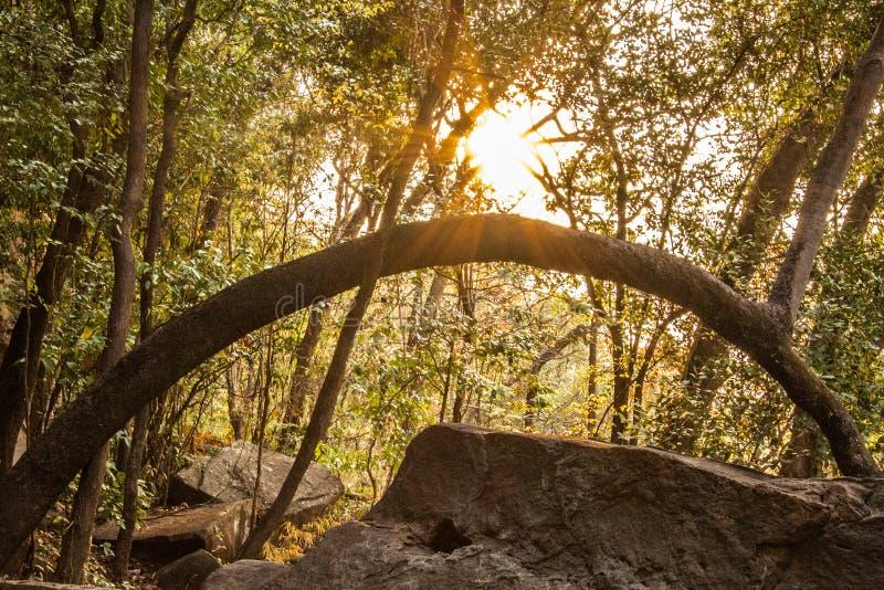 在Pha Taem泰国的日出 库存照片