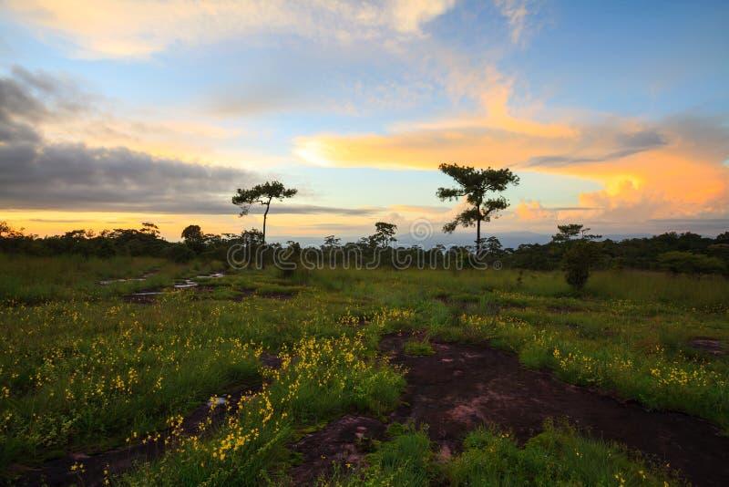 在Phu Hin荣Kla国家公园, P使日落和花环境美化 库存图片