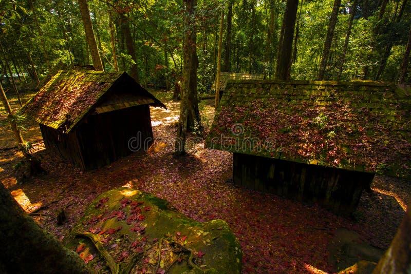 在phu hin rongkla国立公园pitsanuloke省泰国的红色枫叶 库存图片