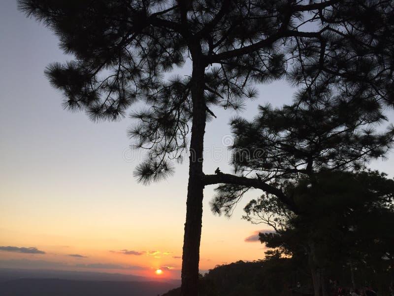 在Phu Kradueng国家公园的日落 库存照片