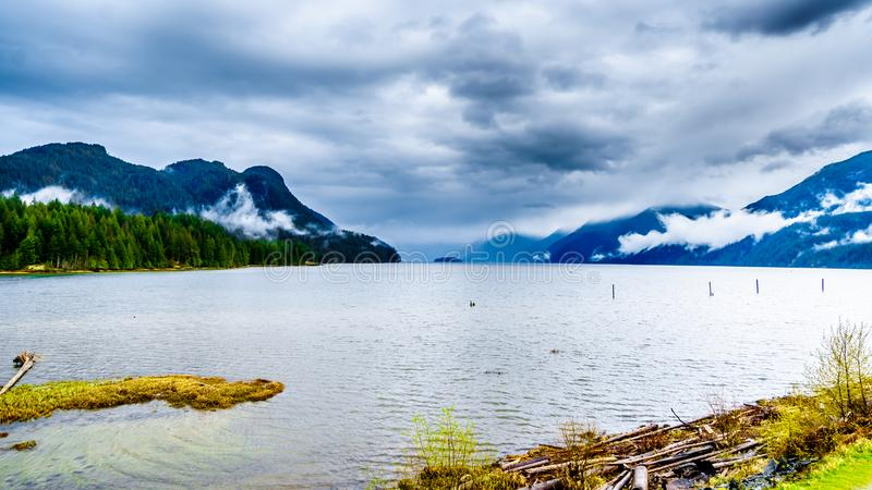 在Pitt湖岸的漂流木头在与垂悬在山附近的雨云的黑暗的多云天空下 免版税库存照片