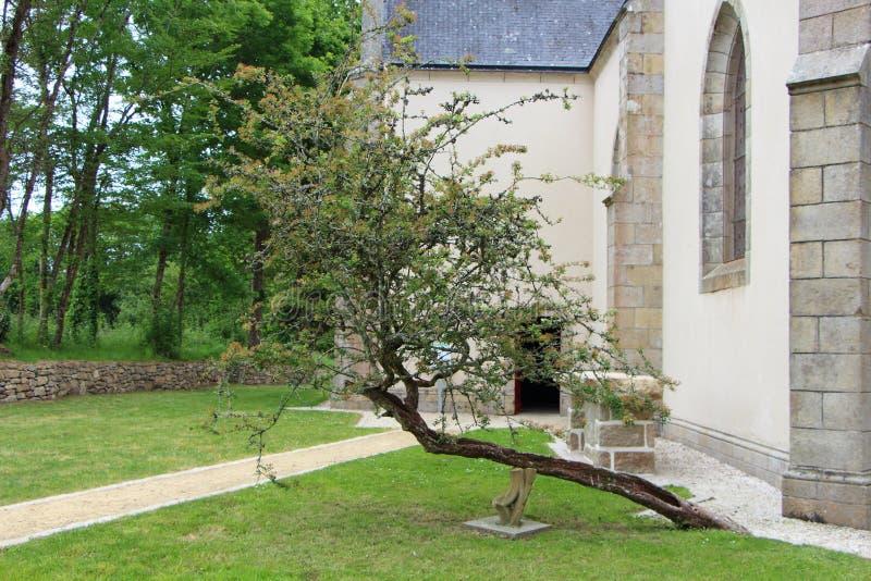 在Plas Kaer教堂前面的被击倒的树在Crach 免版税图库摄影