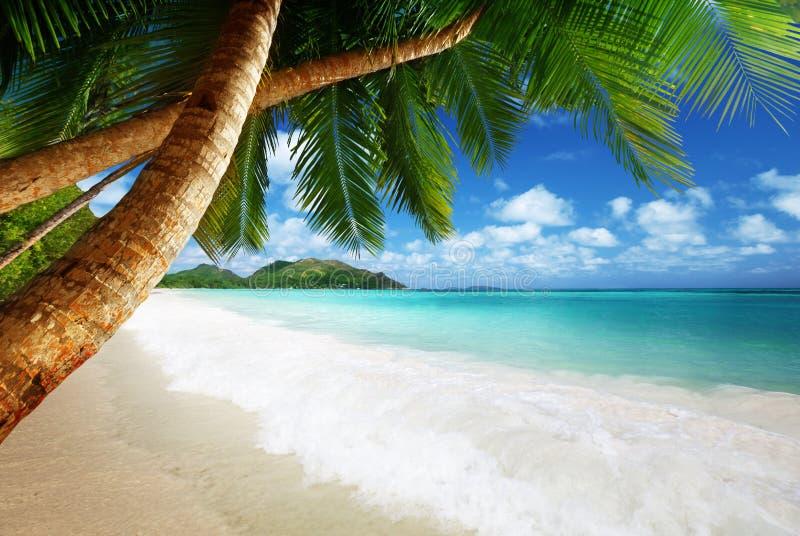 在Prtaslin海岛的海滩 免版税库存图片