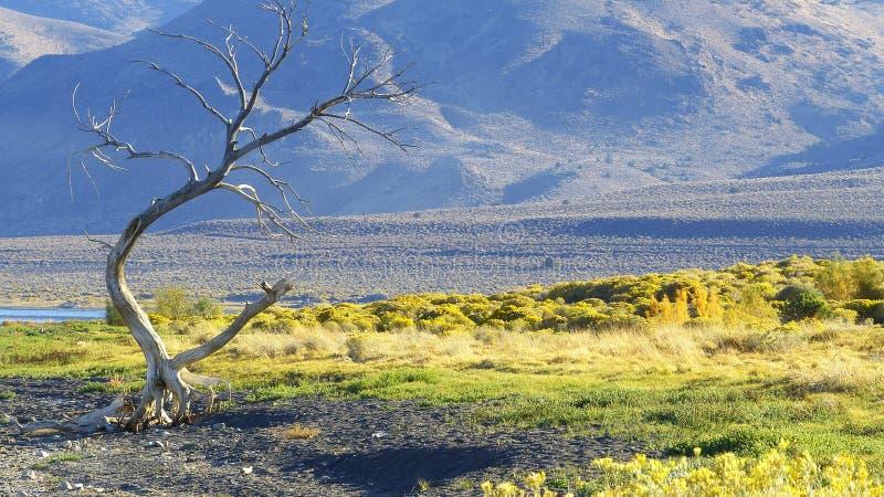 在Pyramid湖的死的树 库存照片