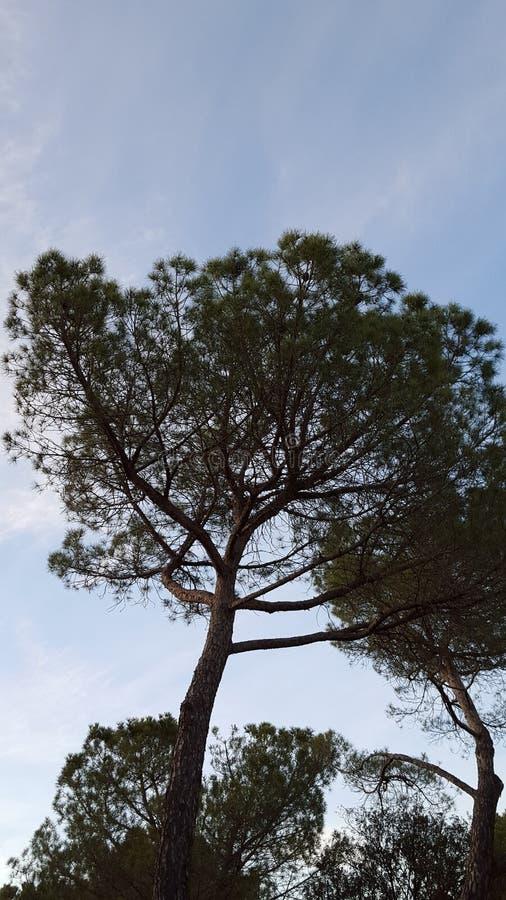 在pyrinees山的自然 免版税库存照片