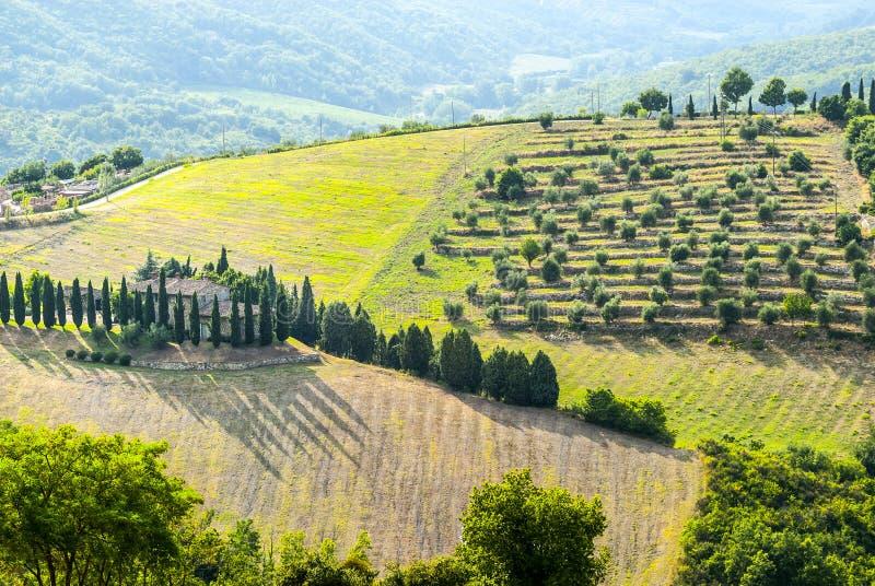 在Radda附近的Chianti风景,与柏和橄榄树 免版税图库摄影