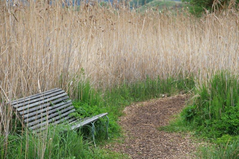 在reet之间的偏僻的长凳与绕小径 库存图片