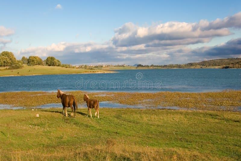 在reinosa附近的ebro沼泽 免版税库存图片