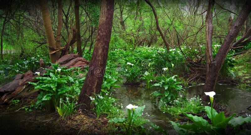 在SA冬天期间, lilly水 库存图片