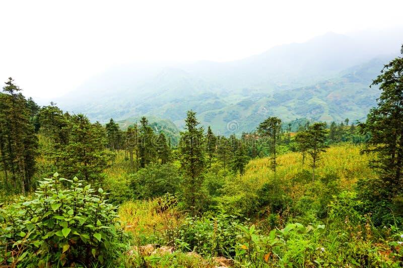 在Sa Pa,越南的风景 图库摄影