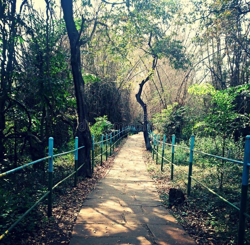 在sagara shivamogga区附近的鸟类保护区 库存照片
