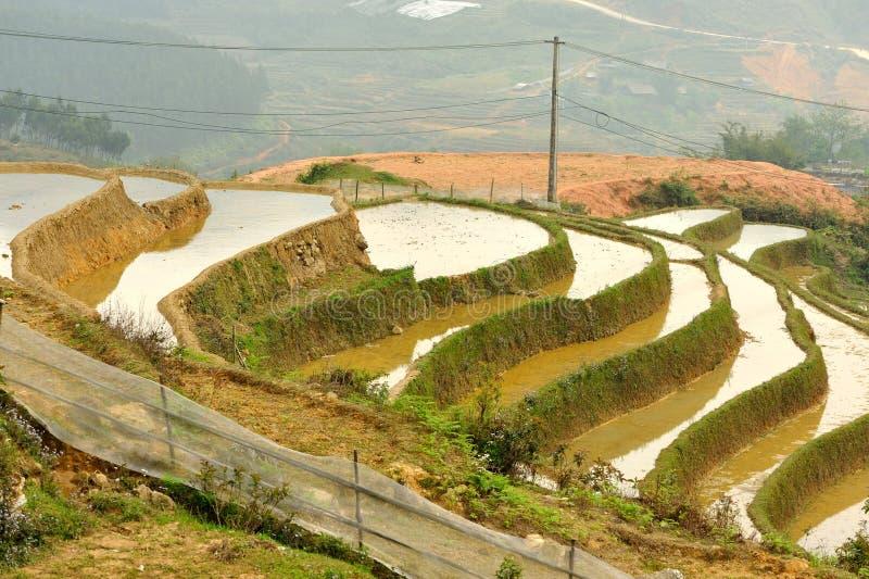 在Sapa附近, Stagewise Ricefields 库存照片