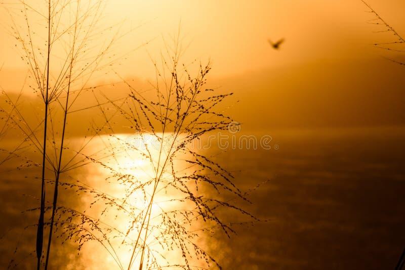 在Saquarema盐水湖的金黄黄昏 图库摄影