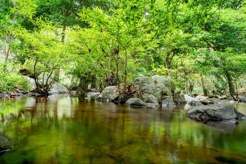 在Satong瀑布的小河在水中看见树 在森林后 库存照片